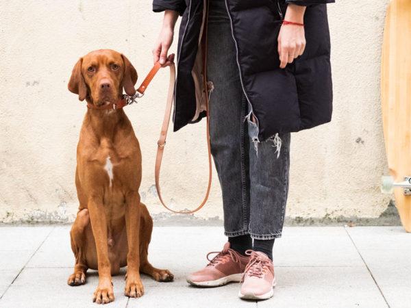 Marevento - Set collar y correa para perro